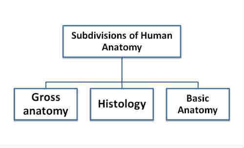 HUMAN ANATOMY – Physicalguru