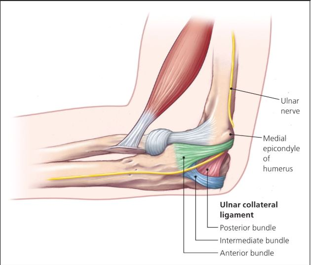 ulnar collateral ligament injury